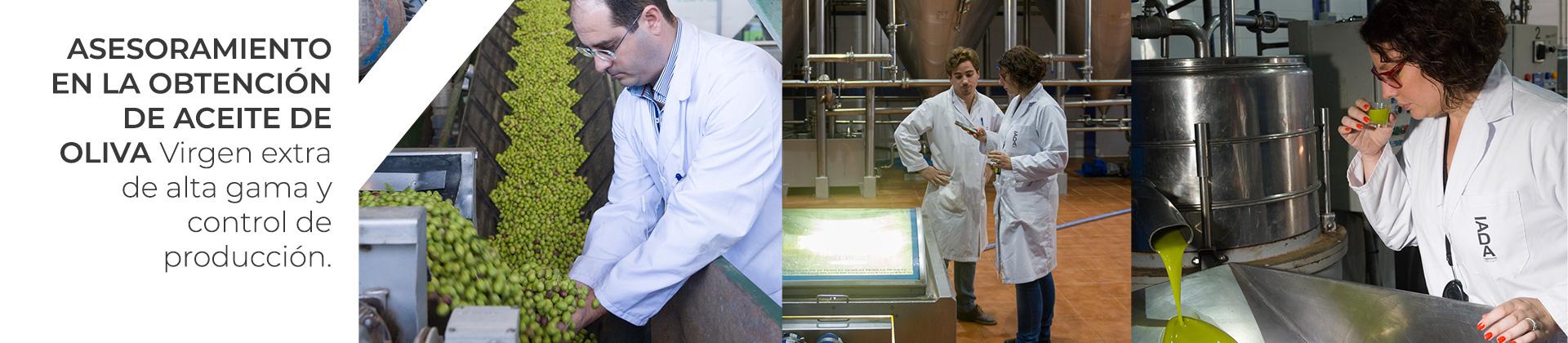 Asesoramiento en la obtención de aceite de oliva virgen extra de alta gama y control de producción.