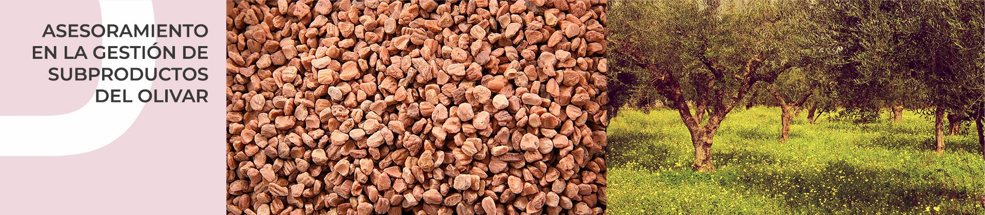 Asesoramiento en la gestión de subproductos del olivar