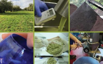 El Equipo de IADA Ingenieros ha participado en el curso superior de aceite de oliva virgen